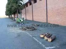 Iniziato un massiccio taglio di alberi a Cavallermaggiore