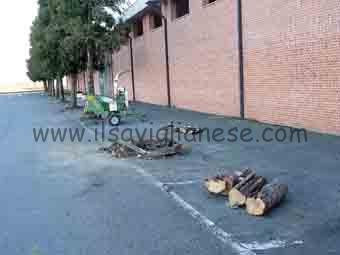 Cava taglio alberi 2