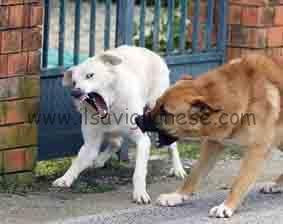 cani feroci