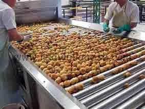 industria frutta