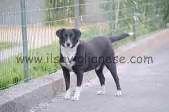 Lilli - cane vagabondo 1