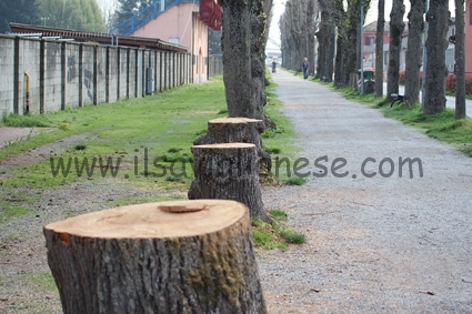alberi tagliati parco graneris