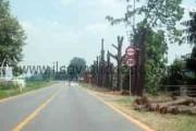 Abbattuti gli alberi alla curva di S. Rosalia