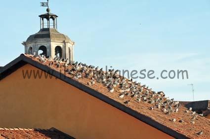 piccioni tetti